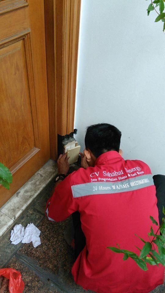 ANTI Pest Control Service
