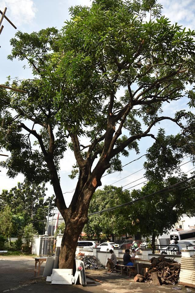 Pangkas Pohon